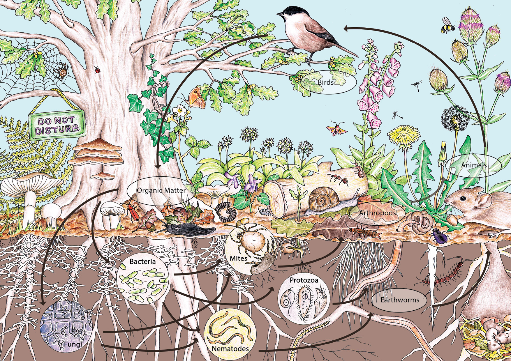 Permaculture | Transition Australia on Backyard Permaculture Design id=55602