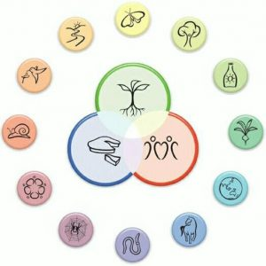 Permaculture principle icons in a circle