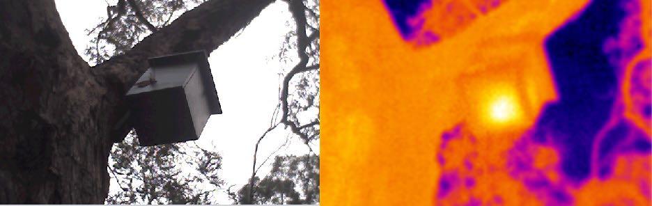 Thermal Image of Sugar Glider Box