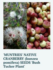 muntries-seeds
